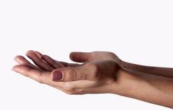 Outstretched höhlte Hände der jungen Frau -, die auf weißem Hintergrund lokalisiert wurde Stockfoto
