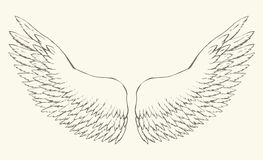 Outstretched wings. Vector drawing Stock Photos