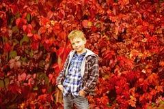 outubro é as folhas caídas Menino pequeno nas folhas de outono O menino pequeno aprecia feriados do outono Há uma harmonia no out fotografia de stock royalty free
