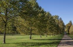 outubro brilhante e ensolarado em Londres - uma ideia de um caminho em Hyde Park fotografia de stock royalty free