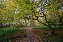 outubro na floresta de Sonian imagem de stock