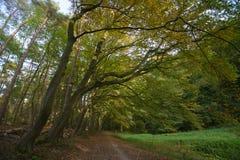 outubro na floresta de Sonian fotografia de stock