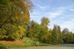 outubro na floresta de Sonian fotos de stock