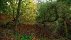 outubro na floresta de Sonian fotografia de stock royalty free