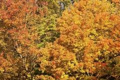 Outubro no vale de Cuyahoga fotografia de stock