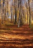 Outum森林在好日子 免版税库存图片