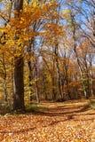 Outum森林在好日子 库存照片