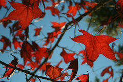 Outumn-Blätter - Campos tun Jordao stockfotografie