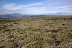Outwash plain and moss somewhere  in Iceland. Outwash plain covered with moss  in Iceland with volcanic hills in the background Stock Image