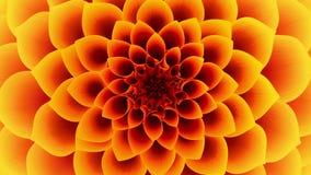 Ouverture de la fleur jaune bouclé banque de vidéos
