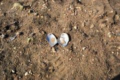 Ouvrez la coquille en sable Photographie stock libre de droits