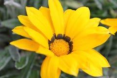 Ouvrez la fleur Photos stock