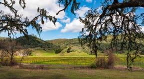 Ouvrez la vue de vallée des collines et des vignobles au printemps photos stock