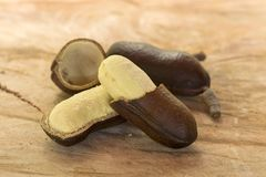 Ouvrez le fruit de jatoba et la graine - seecourbaril ou copal brésilien Photographie stock