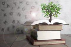 Ouvrez le livre avec l'arbre Image libre de droits