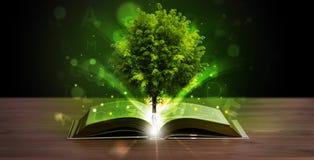 Ouvrez le livre avec l'arbre et les rayons de la lumière verts magiques Image libre de droits