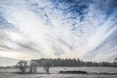 Ouvrez le paysage d'hiver avec le gel et le ciel dramatique Image libre de droits