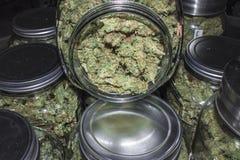 Ouvrez le pot de marijuana indiquant les bourgeons verts Images libres de droits