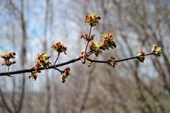 Ouvrez les feuilles des arbres photographie stock libre de droits