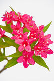 Ouvrez les fleurs rouges en gros plan Photo libre de droits