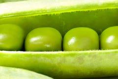 Ouvrez Pea Pod frais, macro Photographie stock libre de droits