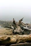 Ouvrez une session la côte d'océan, plage de poussée de La Photographie stock libre de droits
