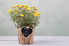 ouvrez votre coeur - belles fleurs dans le pot avec la carte de message Photographie stock libre de droits