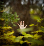 Ouvrez-vous pour la nature Photographie stock libre de droits