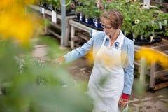 Ouvrier aîné de jardinerie Image stock