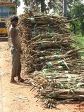 Ouvrier de canne à sucre après le tsunami 2004 Photos libres de droits