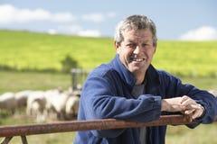 Ouvrier de ferme avec la bande de moutons Image stock