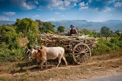 Ouvrier de zone sur le chariot dans myanmar Photos stock