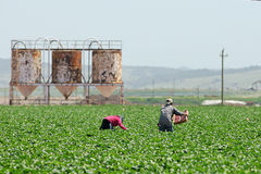 Ouvriers agricoles migrateurs en Californie photos libres de droits