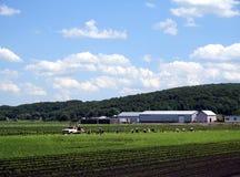 Ouvriers de ferme photos stock