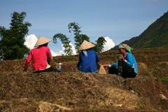 Ouvriers de ferme - Sapa Vietnam Image libre de droits
