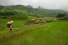 Ouvriers entrant dans la rizière Image libre de droits