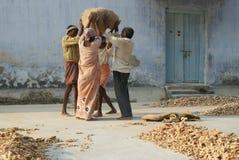 Ouvriers portant le gingembre au marché à Cochin, Ind Photographie stock