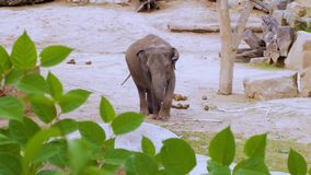 Ouytdoors de los elefantes almacen de video