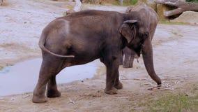 Ouytdoors de los elefantes almacen de metraje de vídeo