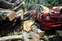 Oväntat en stor gummiträdavverkning på en parkerad röd bil på en stillhet och en solig dag arkivfoton