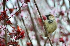 Ovårdad lite sparrow Royaltyfri Bild