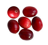 Oval Cranberries Royalty Free Stock Image