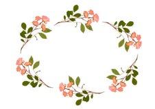 Oval das rosas Imagens de Stock Royalty Free