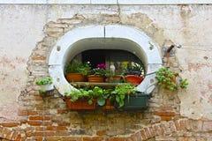 Oval-Formade fönster och växter fotografering för bildbyråer