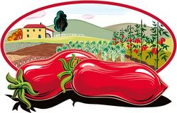 Oval frame with agricultural landscape and tomatoes. In foreground stock illustration