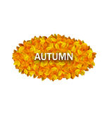 Oval Frame from Autumn Orange Leaves Royalty Free Stock Photography