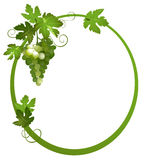 Oval frame with a bunch of grapes - eps Stock Photography
