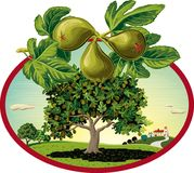 Oval frame with figs in orchard. Oval frame with figs in orchard landscape Stock Photo