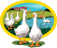 Oval frame with geese. Stock Photo