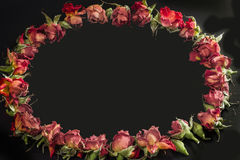 Oval frame made of beautiful  red roses and buds Royalty Free Stock Photo